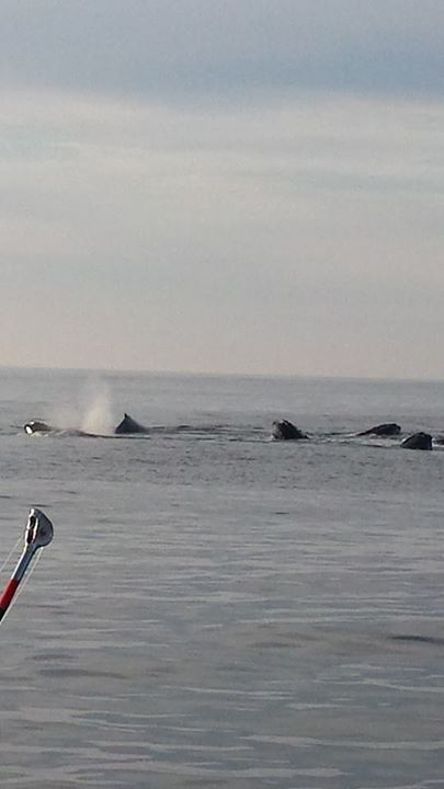 July 4 Whales